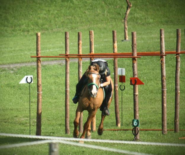 Kom til ridestævne og oplev TREC-disciplinen